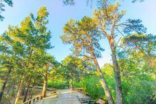 海拉尔国家森林公园-海拉尔-doris圈圈