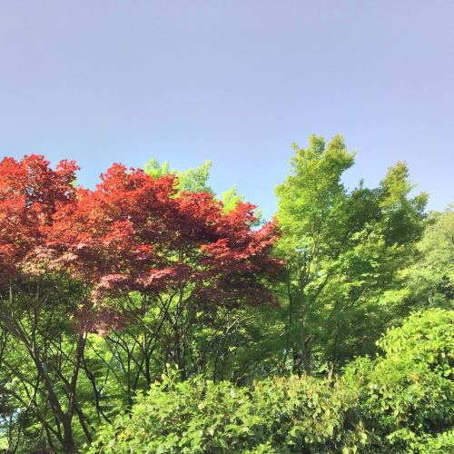 츠키지가와 카메이바시 공원