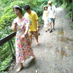 砂卡礑步道用戶圖片