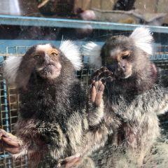 Zoodoo Wildlife Park用戶圖片