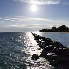 多倫多島用戶圖片