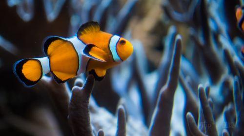 凱利塔頓海底世界