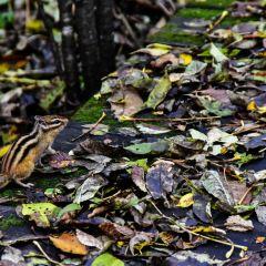 上甘嶺溪水國家森林公園用戶圖片