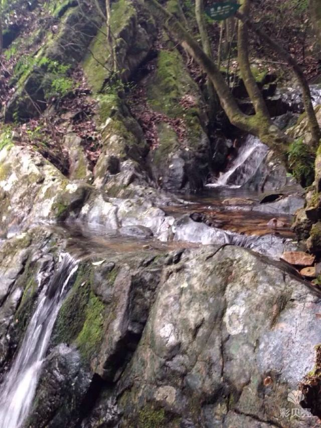 첸다오후 삼림산소방(천도호 삼림양파)