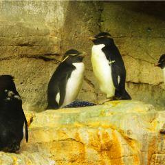 Shedd Aquarium User Photo