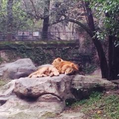 Shanghai Zoo User Photo
