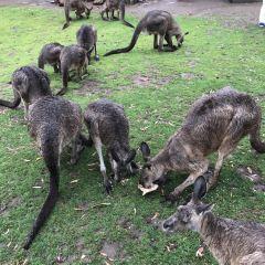 塔斯馬尼亞惡魔公園用戶圖片