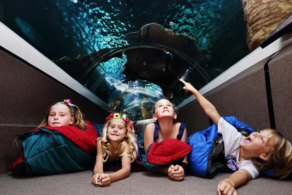 穆魯拉巴海底世界水族館門票
