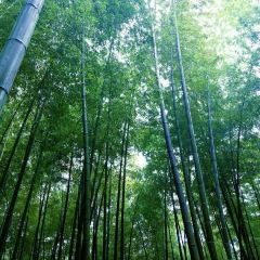 "Shunan Zhuhai (""South Sichuan Bamboo Sea"") National Park User Photo"