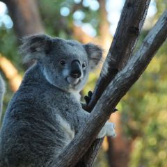 Rockhampton Zoo User Photo