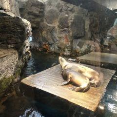 가이유칸 수족관 여행 사진