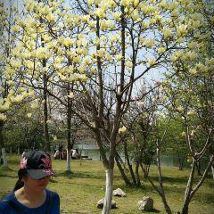 蠡園のユーザー投稿写真