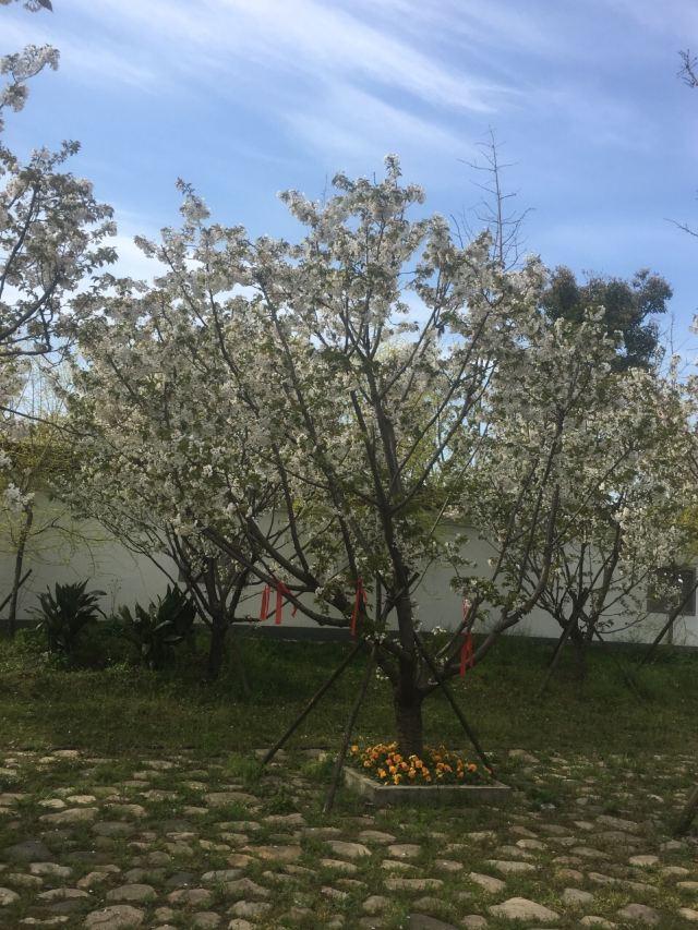 항저우만 해상꽃밭