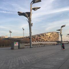Bird's Nest (National Stadium) User Photo