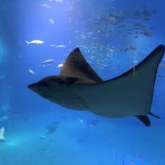 Osaka Aquarium Kaiyukan User Photo