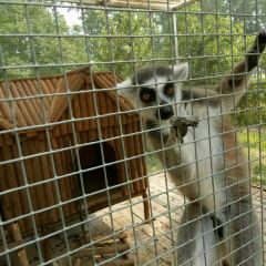 聊城動物園用戶圖片