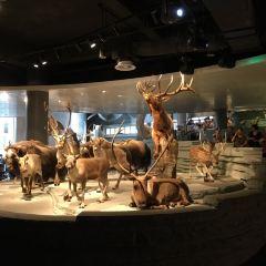 上海自然博物館用戶圖片