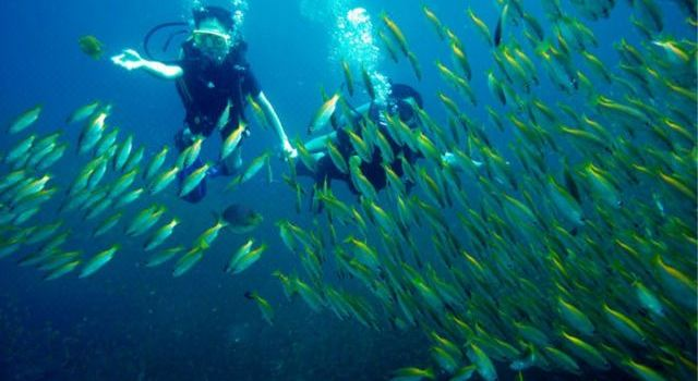 William Diving2