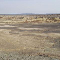 矽化木恐龍國家地質公園用戶圖片