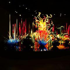 富山市玻璃美術館用戶圖片