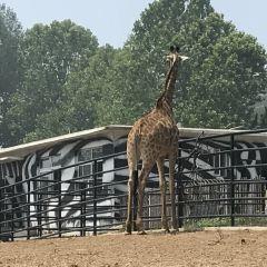 다롄 삼림동물원(대련 삼림동물원) 여행 사진