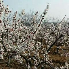 Longevity Baiguozhuang Yuan User Photo