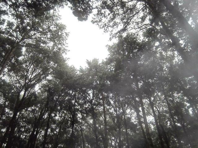 금방 산림 온천
