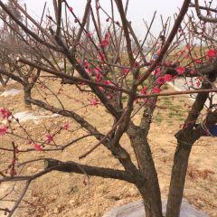 Meihuawan Scenic Spot User Photo