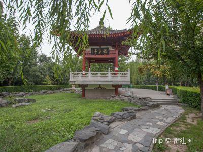 The Peony Garden of Xi'an