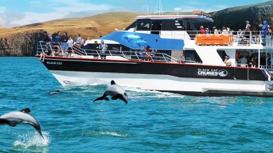 黑貓號遊艇海豚共泳之旅