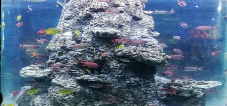綿陽海底世界1