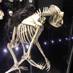 맨체스터 박물관 여행 사진