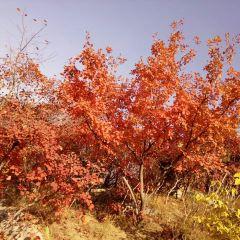 홍엽곡 여행 사진