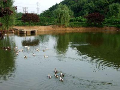 Qiansheng Farm