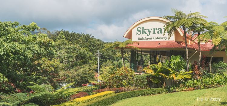 Skyrail熱帶雨林纜車2