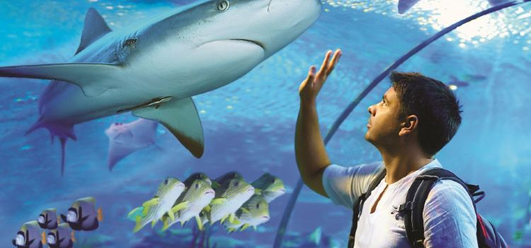 Cairns Aquarium2