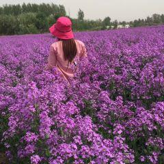 莊浪紫荊山公園用戶圖片