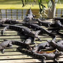 Gatorland User Photo