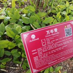 Guangxi Medical Botanical Garden User Photo