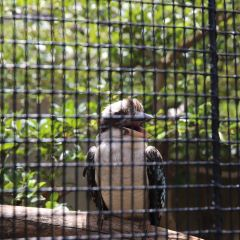 Honolulu Zoo User Photo