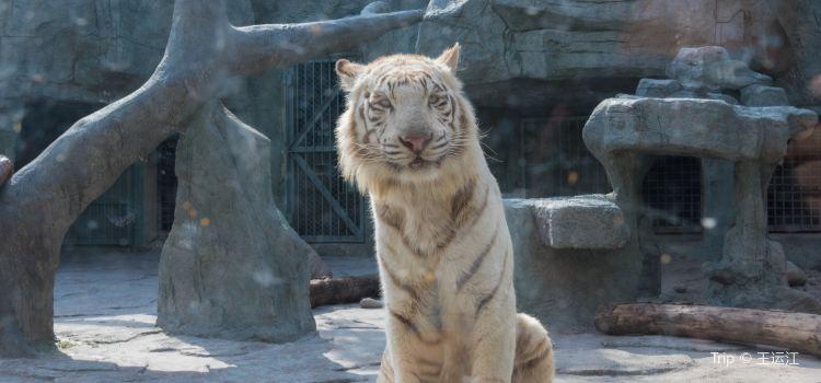 温州動物園2