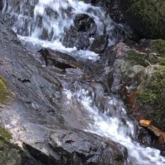 고로산 여행 사진