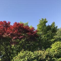 츠키지가와 카메이바시 공원 여행 사진