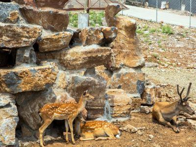 寶山前野生動物園