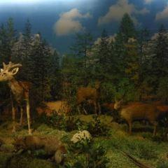 Changbaishan Natural Museum User Photo