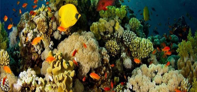 永泰歐樂堡海洋世界1