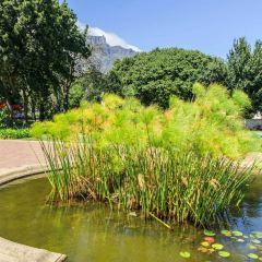 Company's Gardens User Photo