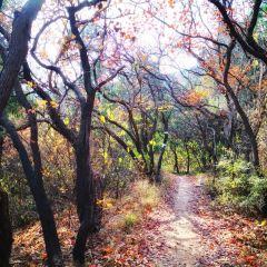 베이징시산국가삼림공원 여행 사진