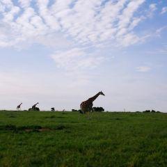 Bwindi Impenetrable National Park User Photo
