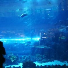 Dubai Aquarium and Underwater Zoo User Photo